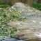 Decorative boulder and plants by Backyards Plus.