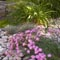 Flowers and plants planted and arranged by Backyards Plus.
