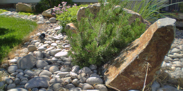 Small evergreen next to decorative stone.