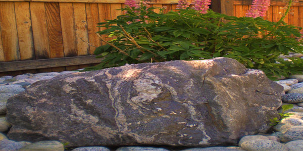Large rock accent in a Denver backyard.