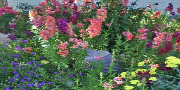 Flower garden in Lakewood, CO.