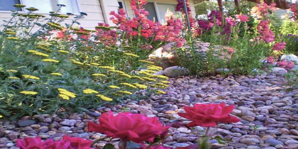 Flowers in rock bed.