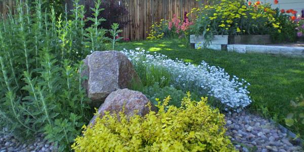 Denver backyard landscaping.