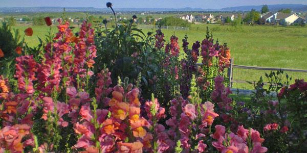 Arvada flower garden by Backyards Plus.
