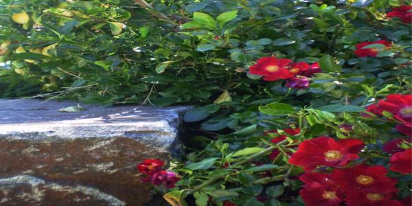 Colorado backyard flower garden.