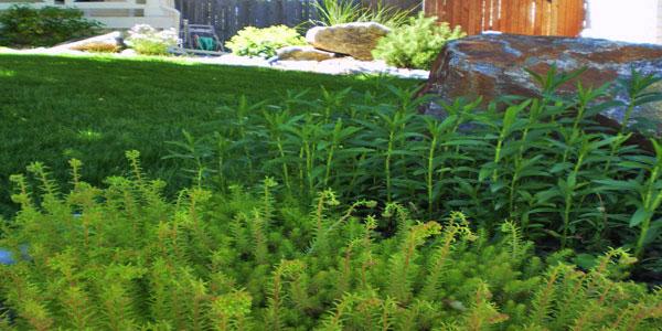 Landscape design Lakewood, CO.