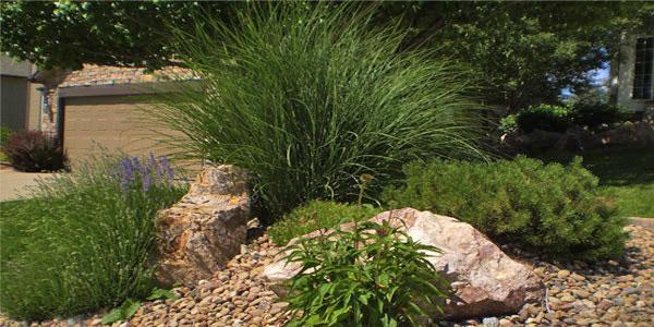 Frontard landscapers Denver, CO.