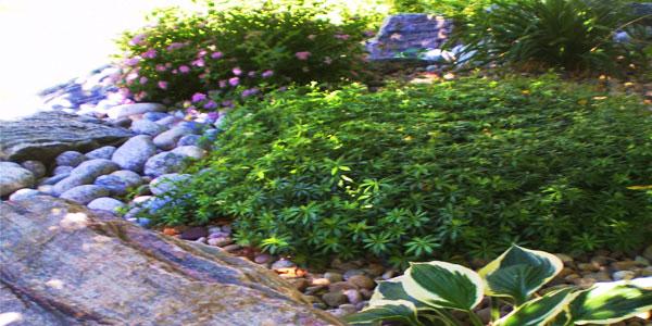 Landscape design services in Denver, CO.