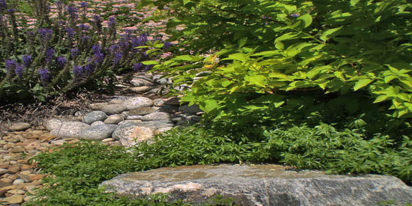 Golden, CO landscaping ideas.