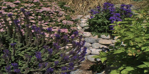Flowers for Denver landscaping.