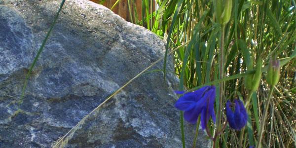 Castle Rock, CO landscapers.