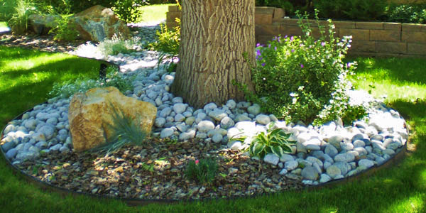 Rock and plant garden surrounding a tree in Denver, CO.