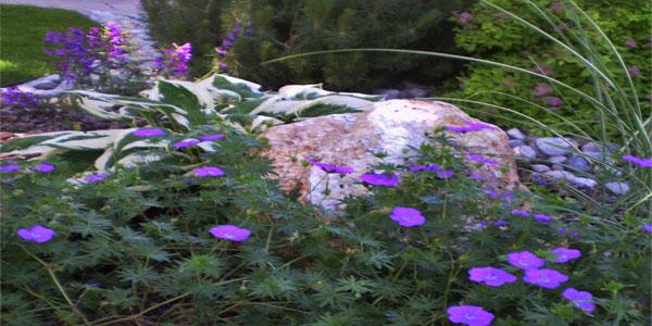 Flowers for Colorado backyards.